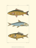 Freshwater Fish II