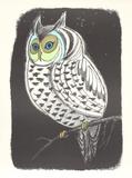 Lummon Owl