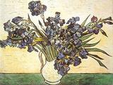 Iris  c1890
