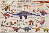 Laminated Sauropods Educational Dinosaur Science Chart Poster
