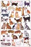 Laminated Cats of the World Educational Science Chart Poster