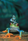 Red Eyed Tree Frogs Art Print Poster