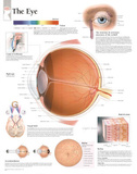 Laminated The Eye Educational Chart Poster
