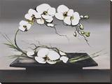 Bonheur D'Orchidées Blanches I Tableau sur toile par Olivier Tramoni