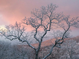 A Pink Dawn and Frosty Trees in the Blue Ridge Mountains