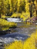 A Fly Fisherman Casts on Beautiful Autumn Day