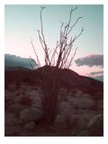 Desert Plants And Sunset