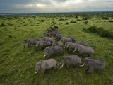 Elephants have miles of savanna to roam inside Queen Elizabeth Park