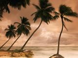 Tropical Sunset  Bridgetown  Barbados  West Indies  Caribbean  Central America