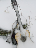 Ice Coats a Mandolin and a Guitar Left Outside as an Art Project