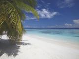 Empty Beach on Tropical Island  Maldives  Indian Ocean  Asia