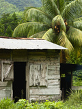 Farmer's Home on a Pineapple Farm  White River  Delices  Dominica  Windward Islands  West Indies  C