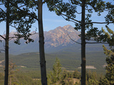 View of Pyramid Mountain Through Trees  Jasper National Park  UNESCO World Heritage Site  British C