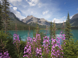 Emerald Lake  Yoho National Park  UNESCO World Heritage Site  British Columbia  Rocky Mountains  Ca