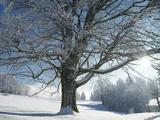 Winter Landscape at Thurner  Black Forest  Baden-Wurttemberg  Germany  Europe