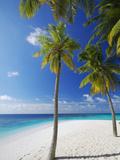 Palm Trees on Beach  Maldives  Indian Ocean  Asia