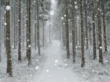 Winter Landscape  Near Villingen-Schwenningen  Black Forest  Baden-Wurttemberg  Germany  Europe
