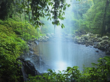 Crystal Shower Falls  Dorrigo National Park  New South Wales  Australia  Pacific