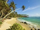 Palm Trees at the Eastern End of the South Coast Whale Watch Surf Beach at Mirissa  Near Matara  So
