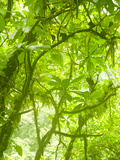 Rainforest Habitat at Trafalgar Falls  Morne Trois Pitons National Park  UNESCO World Heritage Site