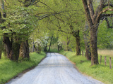Lane at Cades Cove in the Spring in the Smoky Mountains National Park  Tennessee  Usa