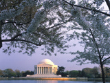 Jefferson Memorial and Cherry Blossoms at Sunrise  Tidal Basin  Washington Dc  Usa