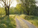 Springtime Path in the Countryside  Mantova/Mantua  Italy