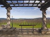 Vineyard in Winter  Rubicon Estate Vineyard  Rutherford  Napa Valley Wine Country  California  Usa