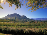 Constantia Wineries  Cape Town  South Africa