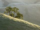 Mt Diablo State Park  California  Usa