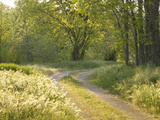 Springtime Path in the Countryside  Mantova/Mantua  Italy