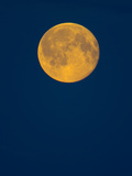 Rising Big Full Moon in a Dark Blue Sky in Autumn