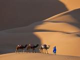 Camels and Dunes, Erg Chebbi, Sahara Desert, Morocco Papier Photo par Peter Adams