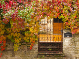 France  Midi-Pyrenees Region  Tarn Department  Cordes-Sur-Ciel  Gate with Autumn Foliage