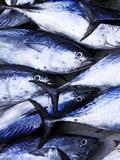 Maldives  Male Atoll  Male Town  Fishmarket
