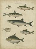 Ichthyology IV