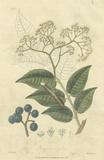 Woodland Foliage IV