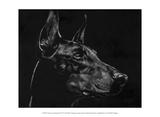 Canine Scratchboard XVI Reproduction d'art par Julie Chapman