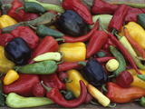 Heirloom Sweet Pepper Harvest