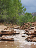 Cottonwood Wash on Cedar Mesa  Utah  USA after a Rain Storm