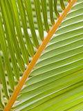 Close Up of a Palm Leaf