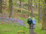 An Elderly Couple Walking Through a Bluebell Wood on the Shores of Coniston Water  United Kingdom