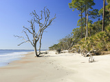 Sandy Shore of Otter Island with Driftwood and Dead Vegetation  a Barrier Island