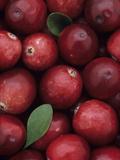 A Harvest of Colorful Cranberries (Vaccinium Macrocarpon)