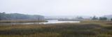 Tidal Salt Marsh with Smooth Cordgrass (Spartina Alterniflora) and Black Needlerush