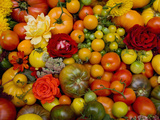 The Tomato Festival in Santa Rosa  California  Local Fruit and Vegtables