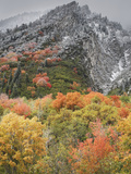 An Autumn Snowfall Decorates the Mountainsides and Trees of Little Cottonwood Canyon