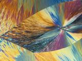 Vitamin C or Ascorbic Acid Crystals  Polarized LM