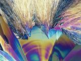 Polarized View of Tartaric Acid Crystals  LM X40