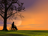Person Outdoors under a Tree Sitting in a Wheelchair
